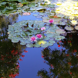 Two Worlds by Victor Eliu - Nature Up Close Other plants ( waterscape, reflections, flowers, landscape, nymphea,  )