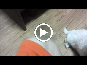 Video: 똑똑한 사랑이 1차 교육 : Watch Me!