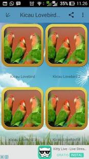 Kicau Lovebird  Jawara - náhled