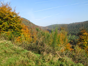 Photo: les couleurs de l'automne