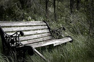 Photo: joel's woods