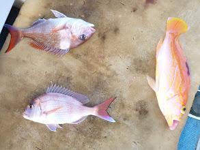Photo: 真鯛ダブルとアカイサキ!