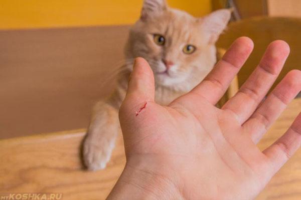 Кошки могут поцарапать