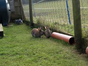 Photo: Bailey, Binky & Bunny