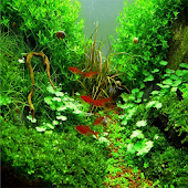 Design Aquarium Aquascape