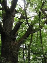 Photo: C6120040 rezerwat Łężczok - pocysterskie stawy