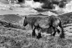 Scogli le trecce ai cavalli