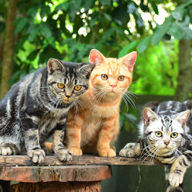 The Ash gang. by Cacang Effendi - Animals - Cats Portraits