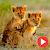 Animal do entary online file APK for Gaming PC/PS3/PS4 Smart TV