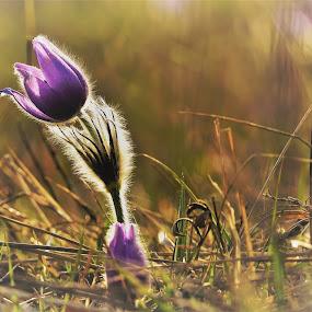 by Jiří Staško - Flowers Flowers in the Wild