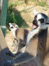 Photo: www.suspect.gr - Αττικό Ζωολογικό Πάρκο