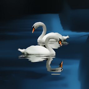 Swans in the wier by Peter Wyatt - Digital Art Animals ( water, swans, wier, waterscape, waterfall, landscape, waterscapes, river )