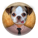 Animaux Face Photo Montage icon