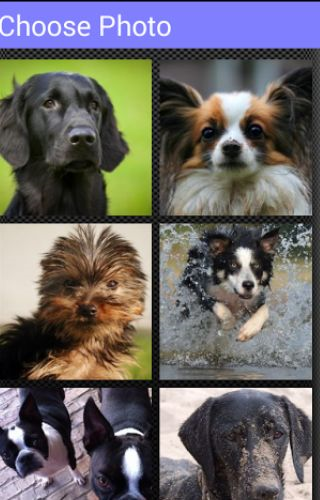 Dogs Muddle Puzzle Game