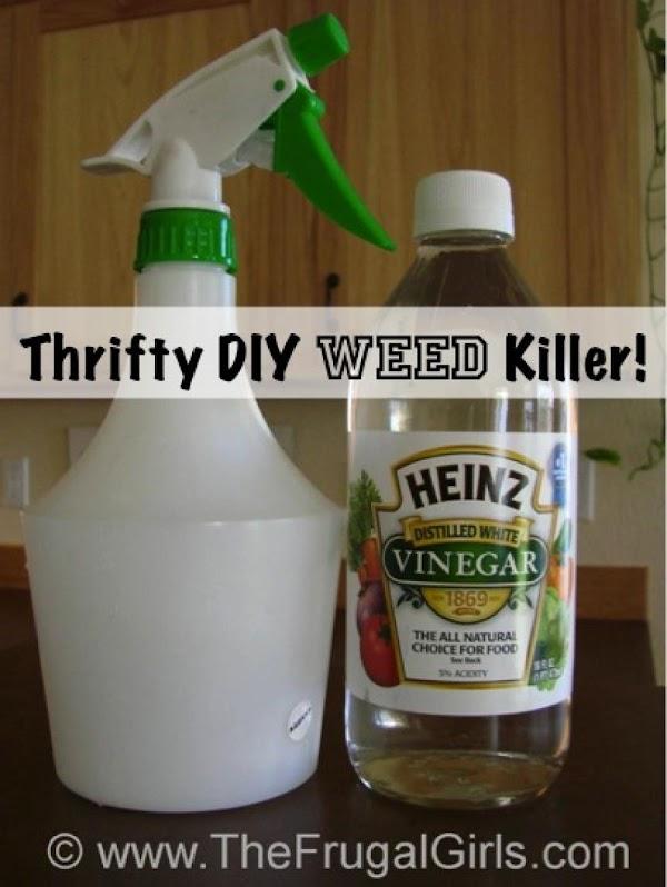Thrifty Diy Weed Killer Recipe