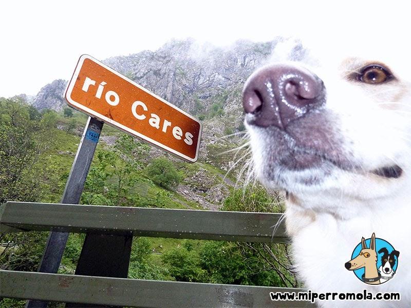Senderismo con Perro Asturias la Ruta del Cares, Asturias con un Can de Palleiro y un Border Collie
