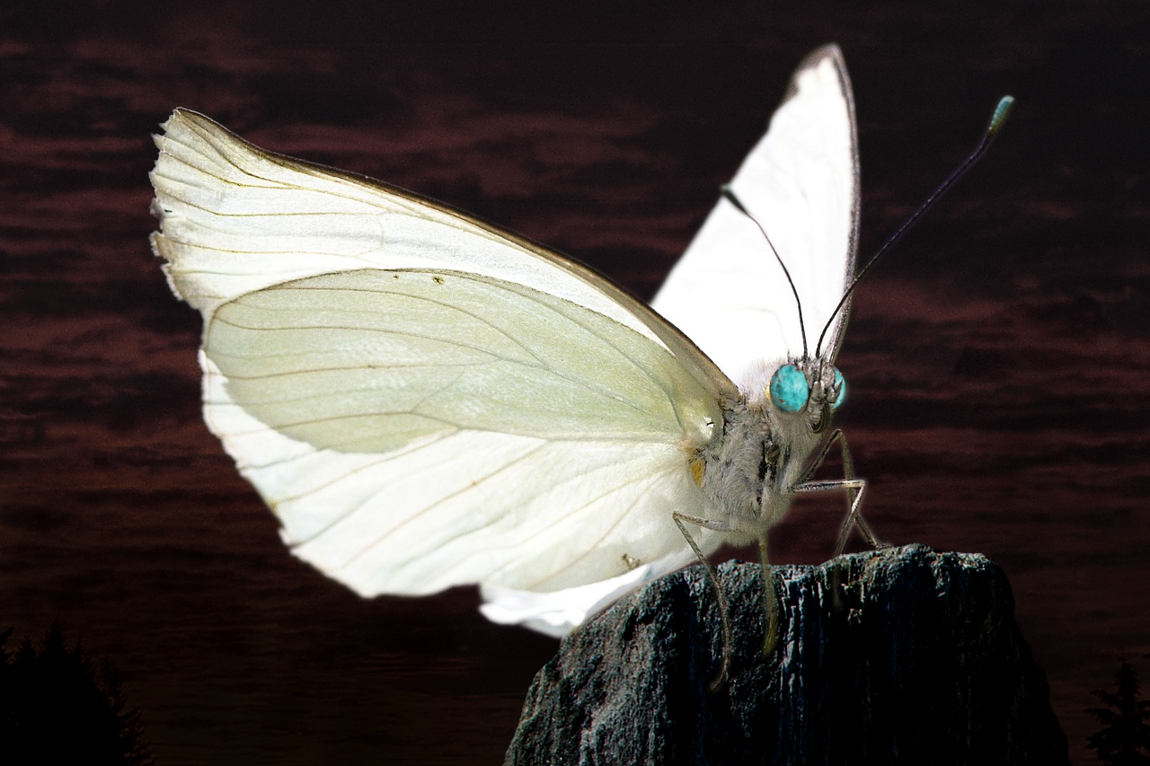 Demonic white butterfly against black clouds.