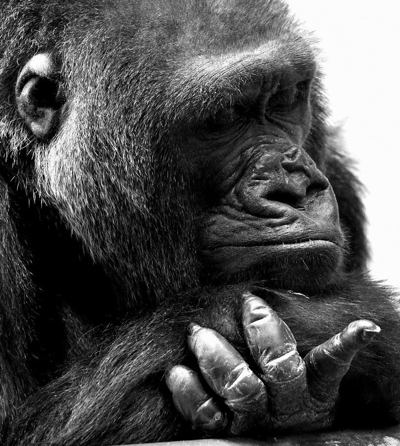 by Ralph Harvey - Animals Other Mammals ( wildlife,  )