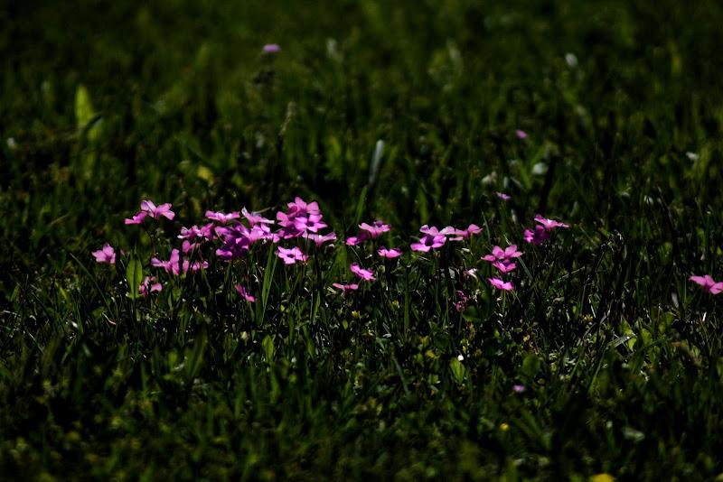 Primavera  di singi72