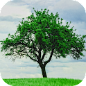 Tree Wallpapers icon