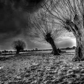 Winters Morning by Leigh Brooksbank - Landscapes Prairies, Meadows & Fields ( winter, show, scenery, landscapes, dedham, blackandwhiteonly )