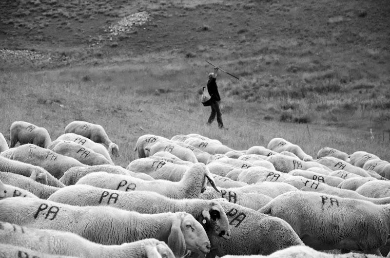 il segno del pastore di giormario