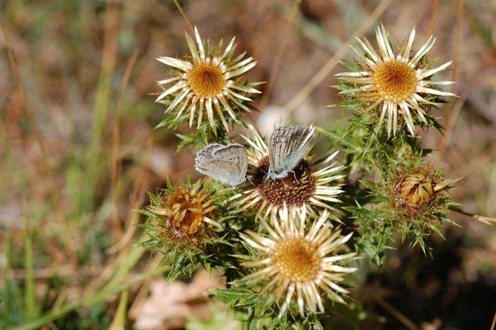 farfalle in compagnia di laprincipessa