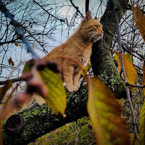Death stare by Antonio Knezevic - Animals - Cats Portraits ( sky, leaves, nature, cat, tree, animal, sweet, sun, cute )