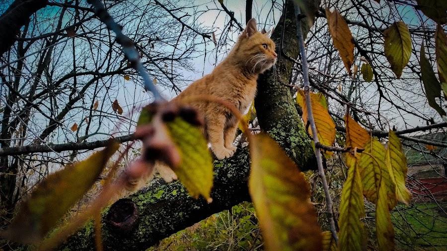 Death stare by Antonio Knezevic - Animals - Cats Portraits ( sky, leaves, nature, cat, tree, animal, sweet, sun, cute )