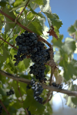 Grapes di FrozenGrave