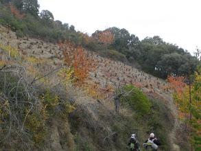 Photo: viñedo en ladera