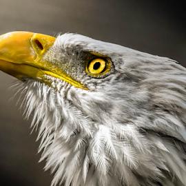 by Darren Sutherland - Animals Birds ( birds )
