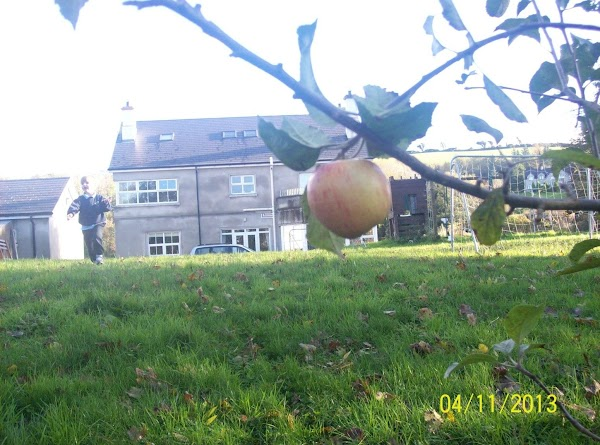 This is one of my apples trees down my back garden, i have three...