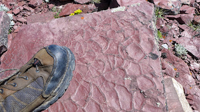 Photo: Mud-cracks in argillite (Belt Formation) - over 1billion years old