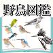 野鳥図鑑 無料〜バードウォッチング×図鑑アプリ 無料×フクロウ×はやぶさ×鳥獣×バードライフ〜