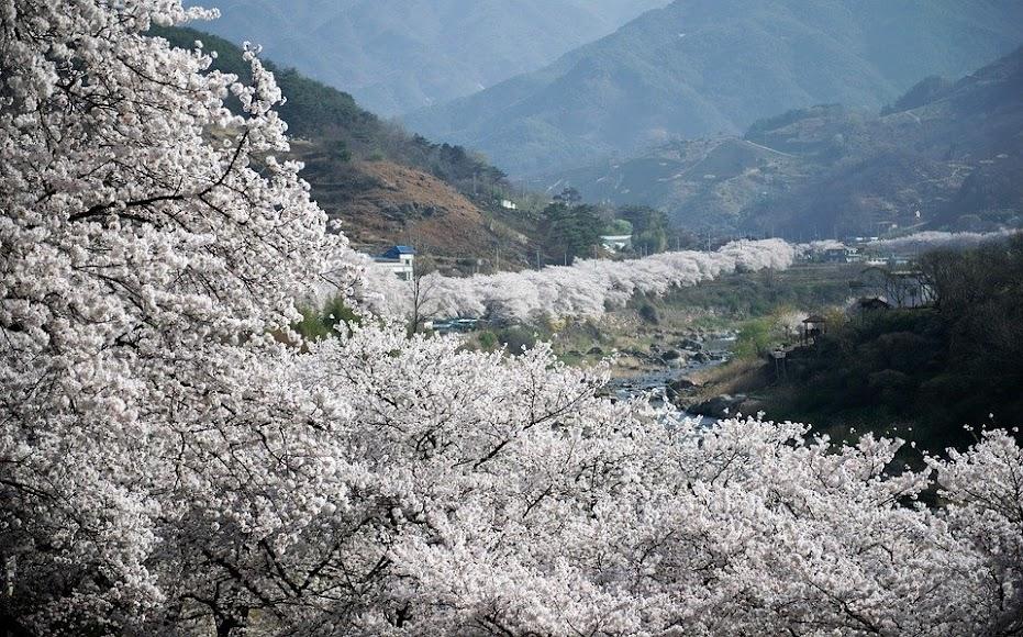 La belleza del Valle del Jerte. FOTO DE PIXABAY.