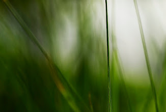 Photo: #grass #photography