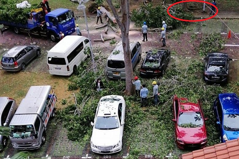 Photo from newspaper showing tree that failed