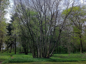 Photo: grouping  #treetuesday // +Tree Tuesdayby +Christina Lawrieand +Shannon S. Myers #fotoamateur // +Fotoamateurby +Britta Rogge// +Scotti van Palm// +Karsten Meyer// +Markus Landsmann// +Remo Primatesta #hqspnaturalother // +HQSP Natural Otherby +Delcour Eric // +Blake Harrold// +Rinus Bakker