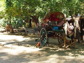 Photo: Horse Cart having rest