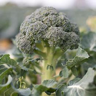 Broccoli Soup With Gorgonzola.