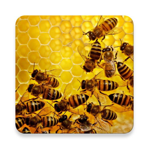 Apiary Book file APK Free for PC, smart TV Download