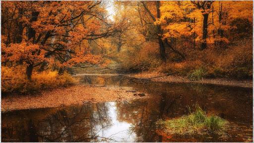 1080p Stunning Nature Pics