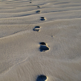 Footprints in the Sand by Alex Window - Nature Up Close Sand ( sand, patterns, texture, beach, shadows, deserted, shapes, clear, footprints, clean, australia, summer, pristine, barefoot )