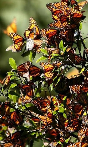 蝶ジグソーパズル