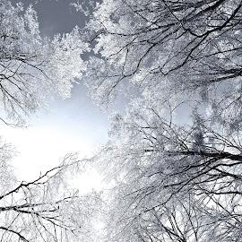 Ice by Al Duke - Black & White Landscapes ( winter, toronto, ice, trees )