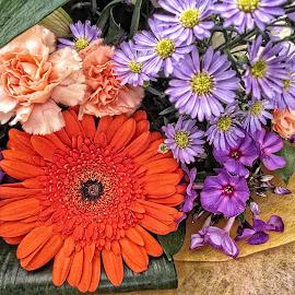 DNI disp 29 by Michael Moore - Flowers Flower Arangements