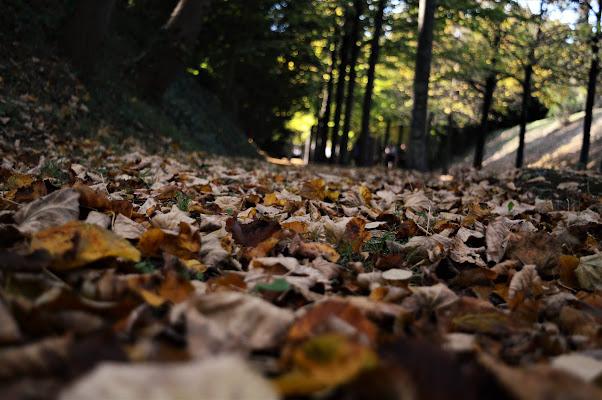 foglie autunnali di robbi79