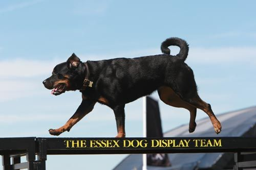 Essex Dogs Display Team