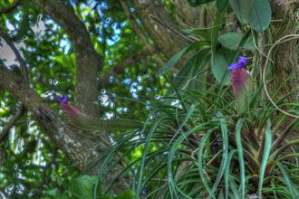 Photo: jardin botanique Deshaies